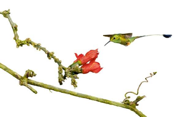 Фото №1 - Птицы малого калибра