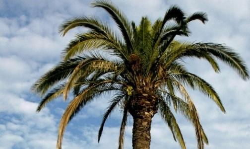 Фото №1 - Почему введение акцизов на пальмовое масло не снизит его потребление в России