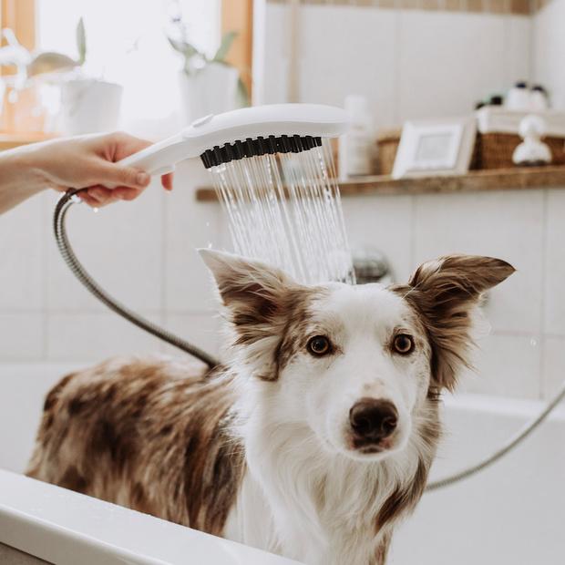 Фото №1 - DogShower: первый ручной душ для собак от Hansgrohe