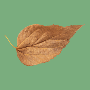 Фото №8 - Тест: Выбери осенний листок и узнай, с чем тебе придется расстаться в сентябре 🍂