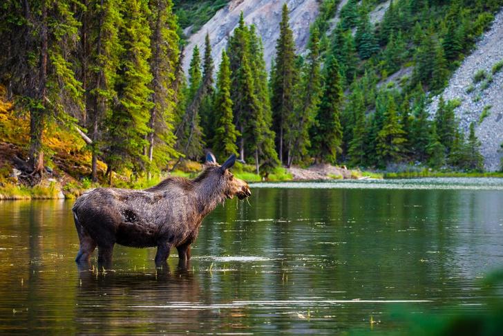 Фото №4 - Первозданная планета: 7 мест для свидания с дикой природой