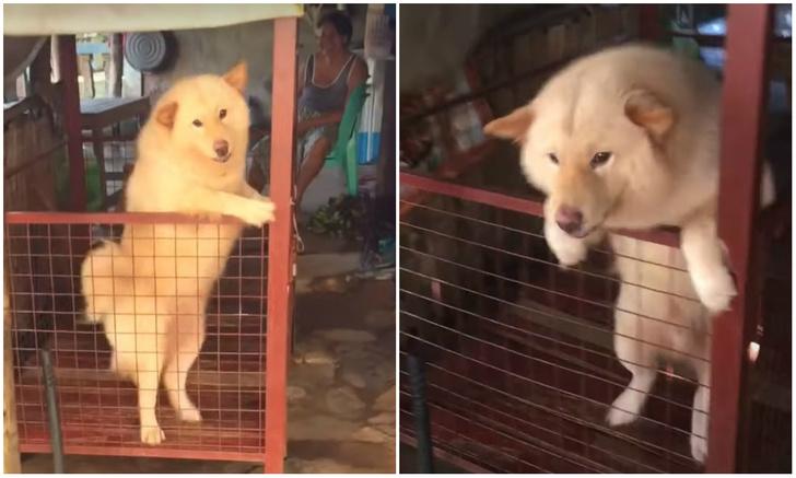 Фото №1 - Реакция собаки, которая увидела хозяина после года разлуки (видео)