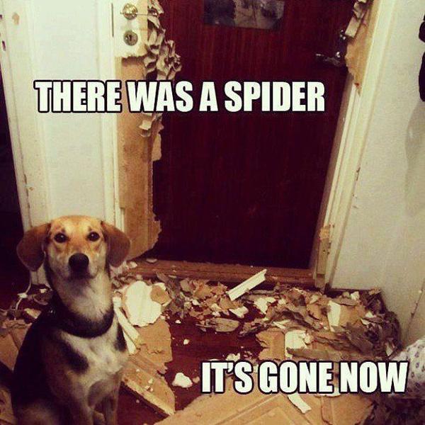 Фото №7 - Милота и угар: 20 дико ржачных мемов про животных