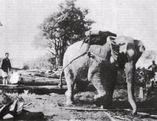 Фото №1 - Белые слоны кха