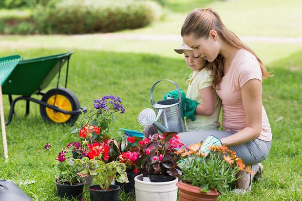 Фото №1 - Играем в садовников: практическая ботаника для детей