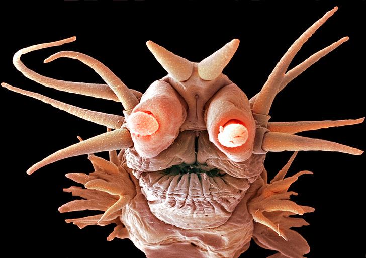 Фото №2 - Наука: там, где живут чудовища