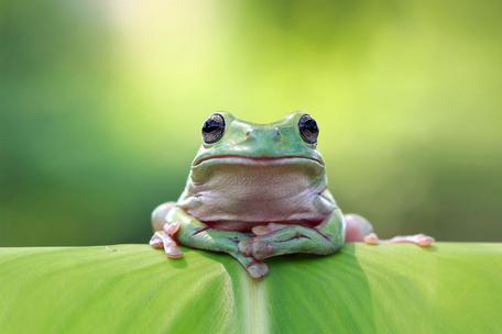 Фото №2 - Тест: Ты жаба или лягушка?