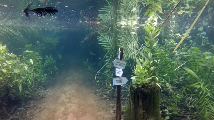 Фото №1 - Сад под водой