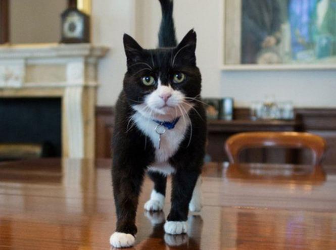 Фото №5 - Коты на службе Ее Величества