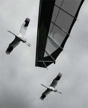 Фото №6 - Злые птички