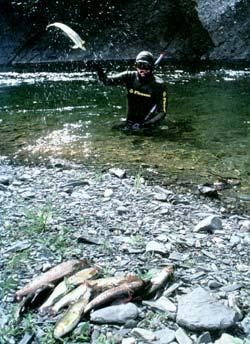 Фото №3 - Азартная охота в ленских заломах