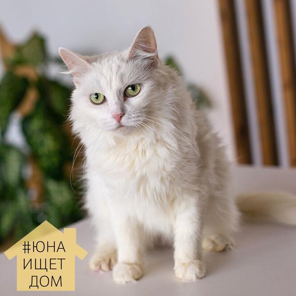 Фото №2 - Найди свою четвероногую любовь на выставке собак и кошек из приюта «Юна-Фест» 💖