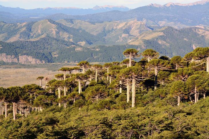 Фото №1 - Ученые сообщают о росте экстремальных засух в Южной Америке
