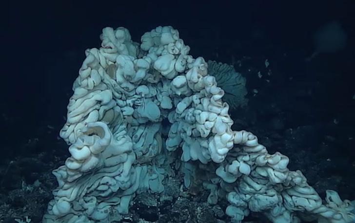 Фото №1 - Обнаружена самая большая губка в мире