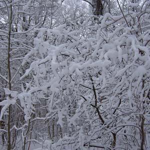 Фото №1 - Зима придет на Новый год