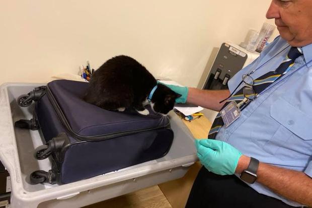 Фото №2 - В аэропорту остановили семейную пару, в чемодан к которой незаметно забралась кошка