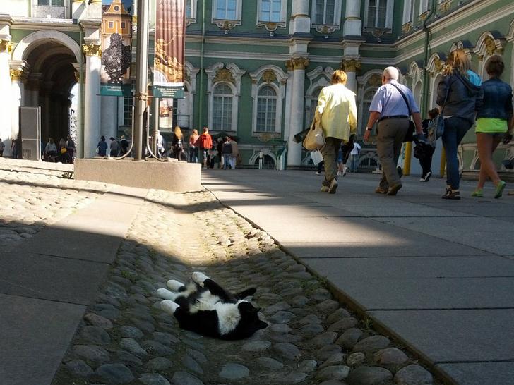 Фото №1 - Британцы рассказали о том, что их больше всего удивляет в России