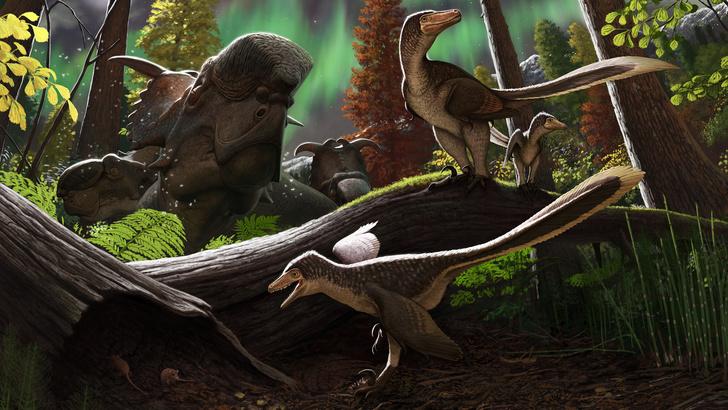 Фото №1 - Ученые подтвердили, что динозавры жили на Аляске