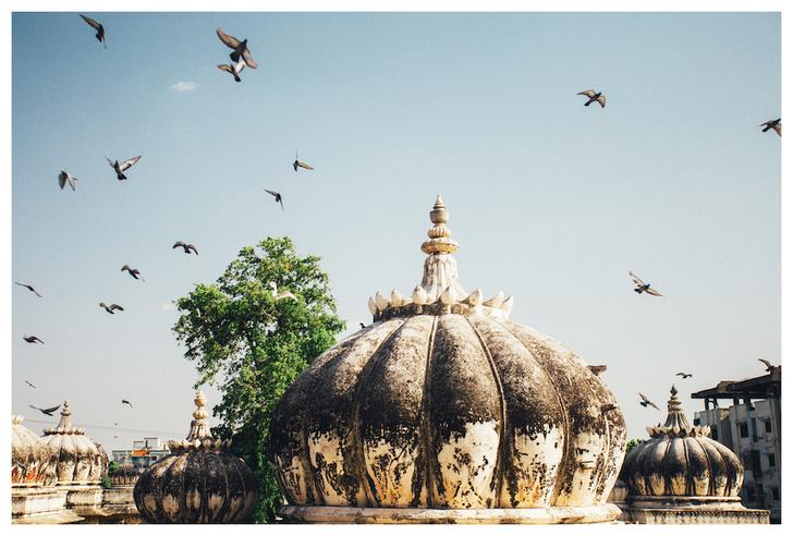 Фото №9 - Личный опыт: как уехать в Индию, чтобы помогать больным и бездомным