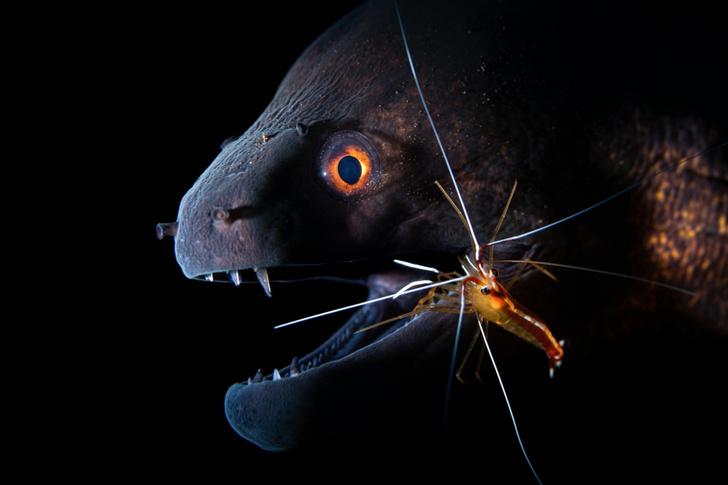 Фото №1 - Подводный союз