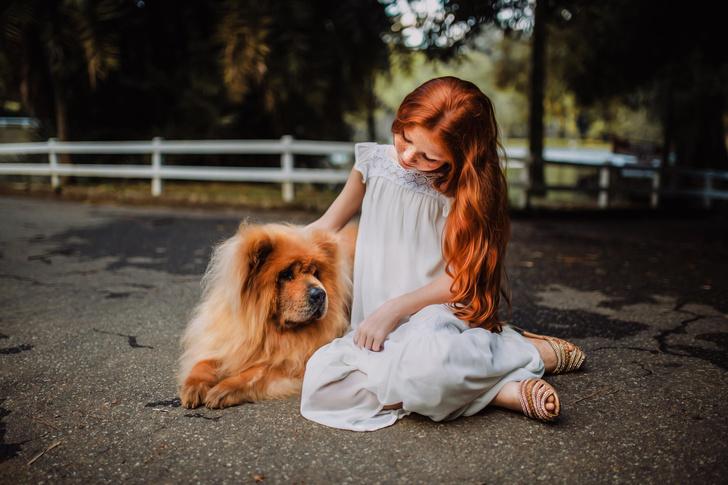 Как научить ребенка правильно общаться с собакой