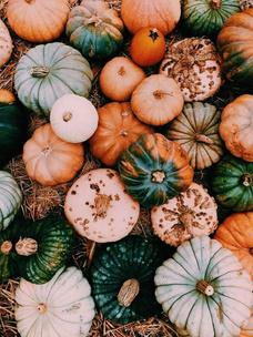 Фото №1 - Тест: Выбери тыкву, и мы опишем твою осень тремя эмодзи