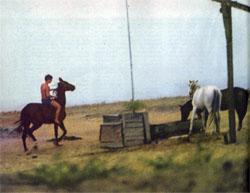 Фото №2 - Нисийские кони