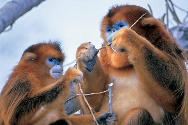 Фото №1 - Горы золотой обезьяны