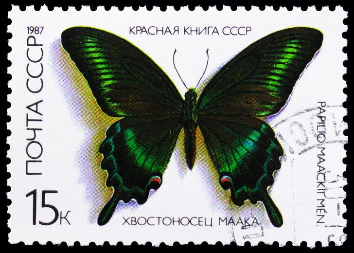 Фото №18 - Эффект бабочки: как чешуекрылым насекомым удается оставаться для нас таинственными незнакомцами