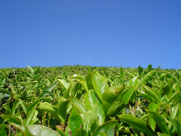 Фото №1 - Зеленый змей китайского розлива