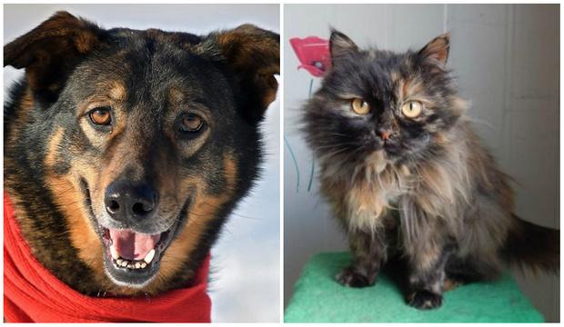 Фото №1 - Котопёс на карантине: кошка Елка и пес Марсель ждут своих хозяев