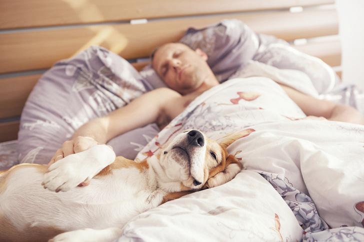 Фото №1 - Сон с домашними животными полезен для здоровья человека