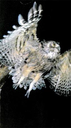 Фото №3 - Птицы летят над клухором