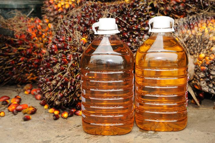 Фото №1 - Пальмовое масло угрожает экологии четырех континентов