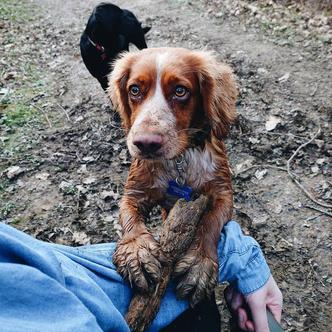 Фото №13 - Если собака без поводка: 15 фото песиков до и после прогулки