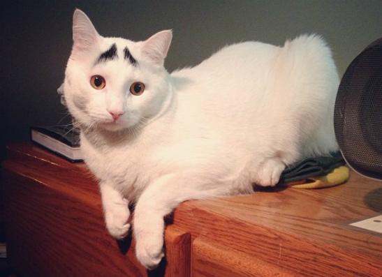 Фото №1 - Кот с бровями собрал в «Инстаграме» 20 тысяч подписчиков