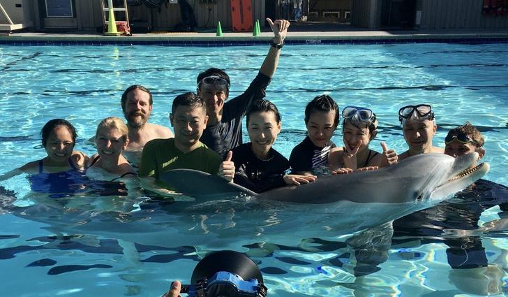 Фото №1 - Китайцы планируют заменить дельфинов в океанариумах роботами