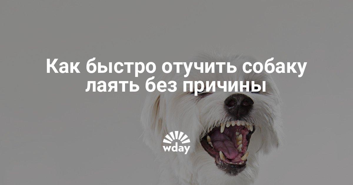 Как отучить щенка лаять в квартире