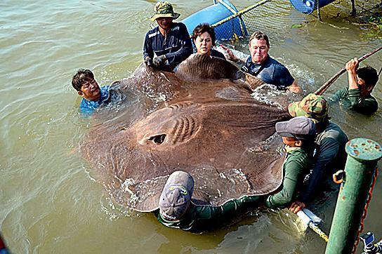 Фото №2 - Таиланд: мировой улов