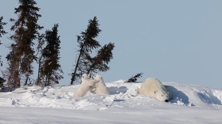 Фото №1 - Выход из зимней спячки