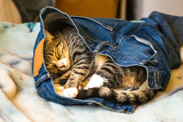 Фото №7 - 10 поз, в которых спит твой кот, и что они значат
