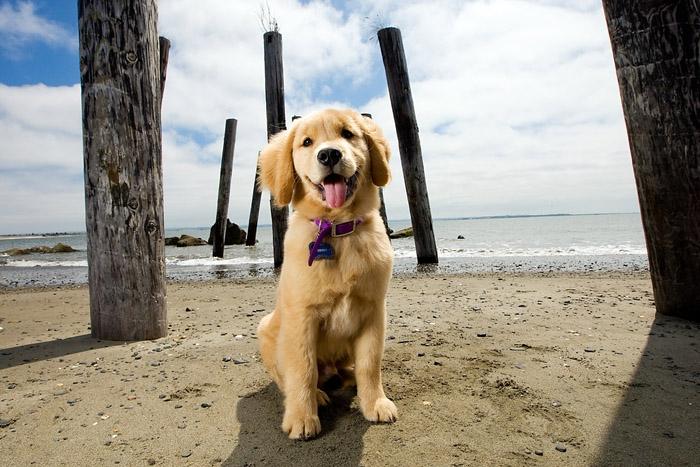 Фото №1 - В США создан смартфон-ошейник для собак