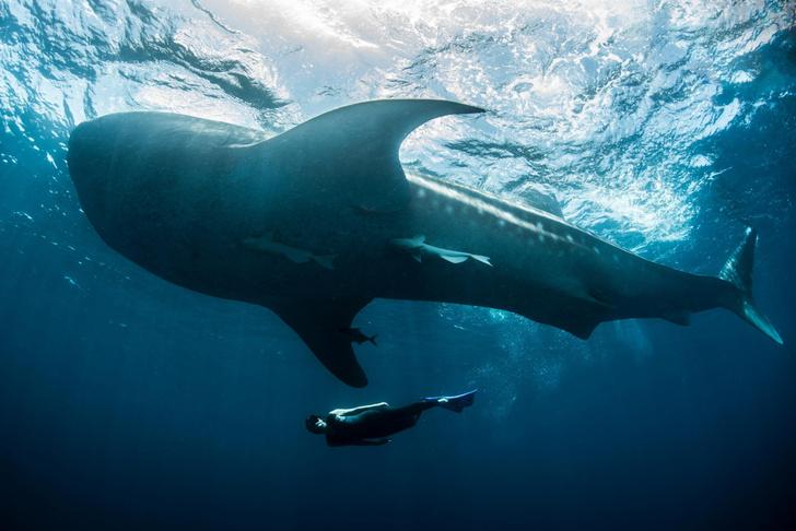 Фото №1 - Изменение климата повредит акулью чешую