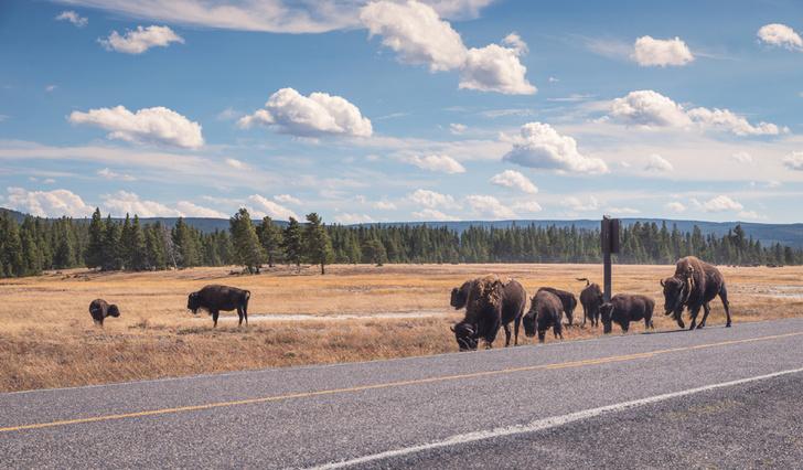 Фото №19 - Пересекая континенты: 8 самых длинных автодорог на планете