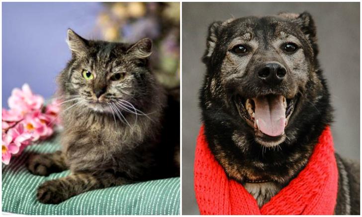 Фото №1 - Котопёс недели: кошка Грета и собака Рябушка