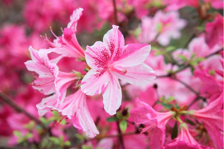 Фото №4 - 7 садовых растений опасных для домашних питомцев
