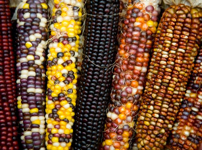 Фото №2 - «Царица полей»: все, что вы не знали (или забыли) о кукурузе