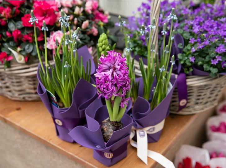 Фото №3 - Пассаж в цветах: почему стоит пойти на цветочный базар в Москве