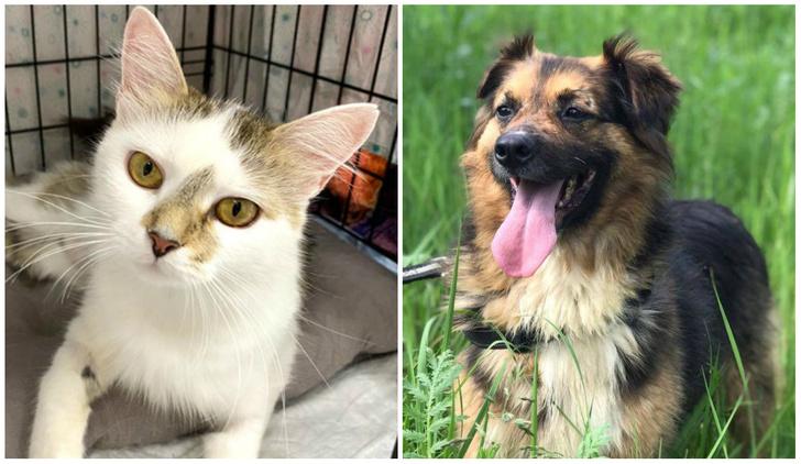 Фото №1 - Котопёс недели: ласковая кошка Шарлотта и благовоспитанный пес Рябчик ищут дом