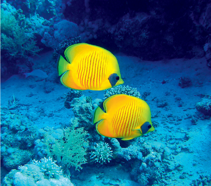 Фото №1 - Как общаются рыбы?